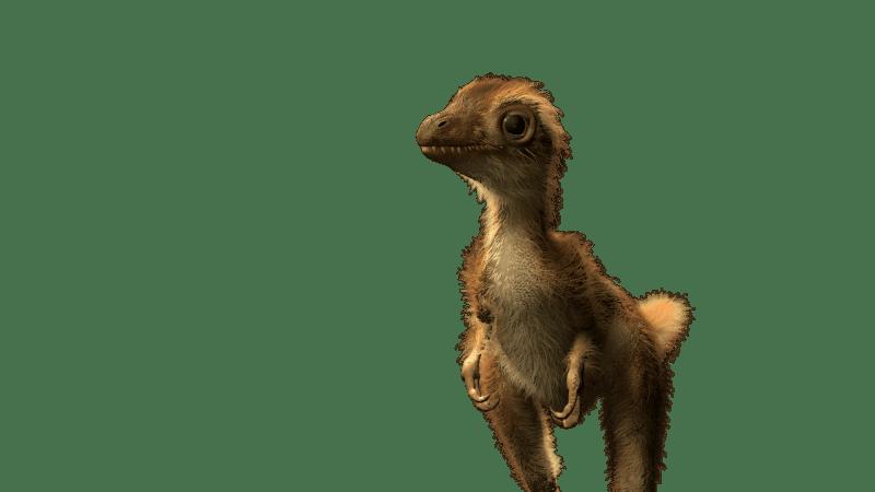 Illustration of T. Rex hatchling. Credit: AMNH.