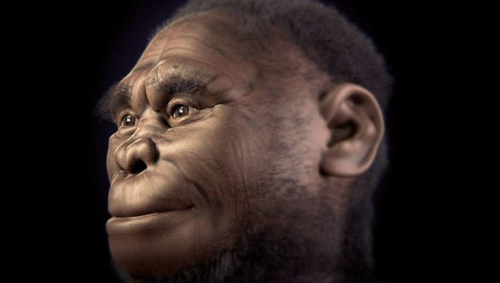 Digital reconstruction of homo floresiensis, nicknamed 'the hobbit'. Credit: Wikimedia Commons.