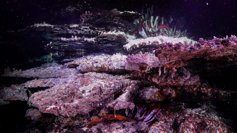 "Scientists find superhot ""mirror"" pools in unique deep Pacific environment"