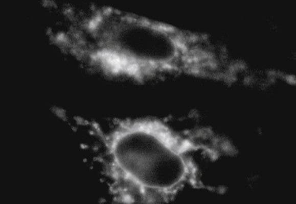 Cell image.