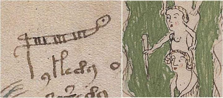 According to Cheshire, this page from the manuscript shows the word 'palina' which is a rod for measuring the depth of water, sometimes called a stadia rod or ruler. The letter 'p' has been extended. Credit: Voynich manuscript.