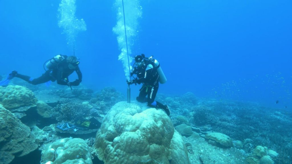 Reserachers extracted coral cores in order to tease out information about Earth's past climate. Credit: Jason Turl.