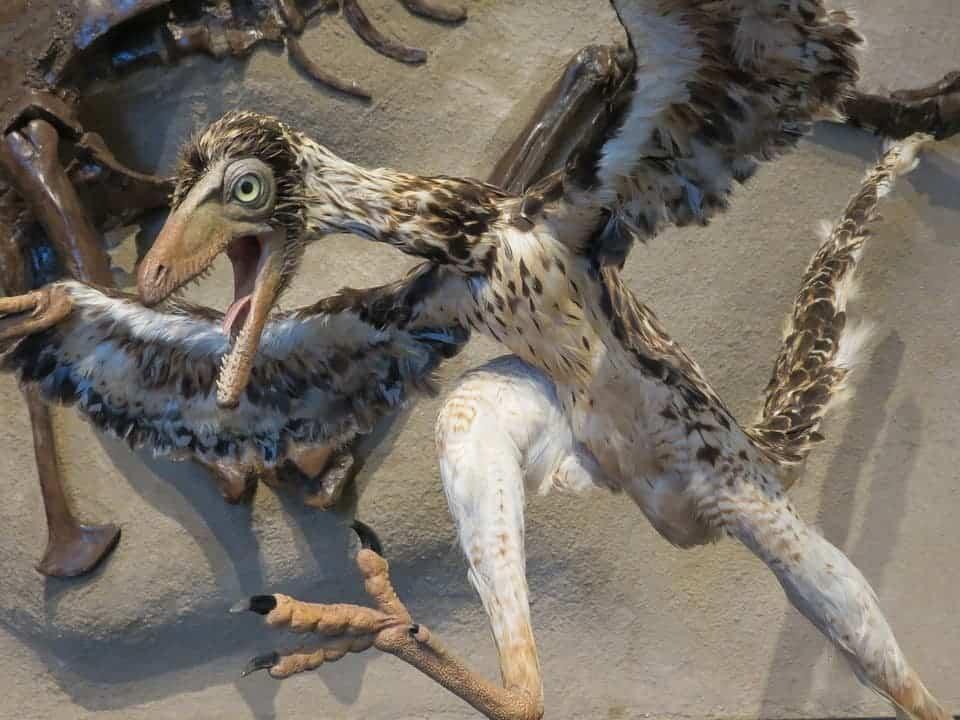 Archaeopteryx.