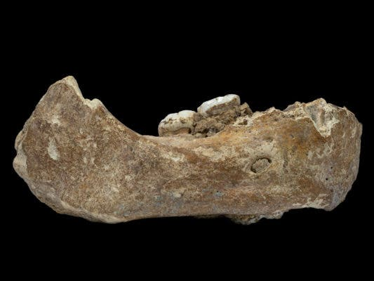 The Xiahe mandible was originally found in 1980 in Baishiya Karst Cave. Credit: Dongju Zhang/Lanzhou University.
