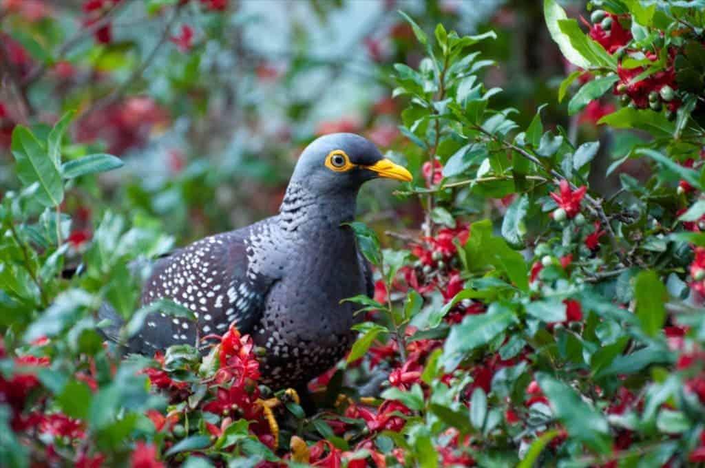 Birds also prefer fancier neighborhoods -- as long as there's enough green  space