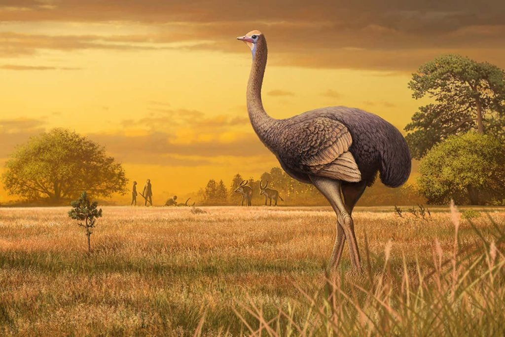 Artist impression of the giant bird found in Crimea. Credit: Andrey Atuchin.