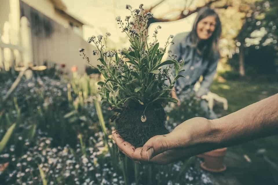 Plant soil.
