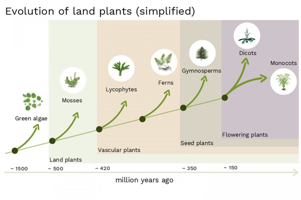 Simplified schematic of plant evolution. Credit: IST Austria.