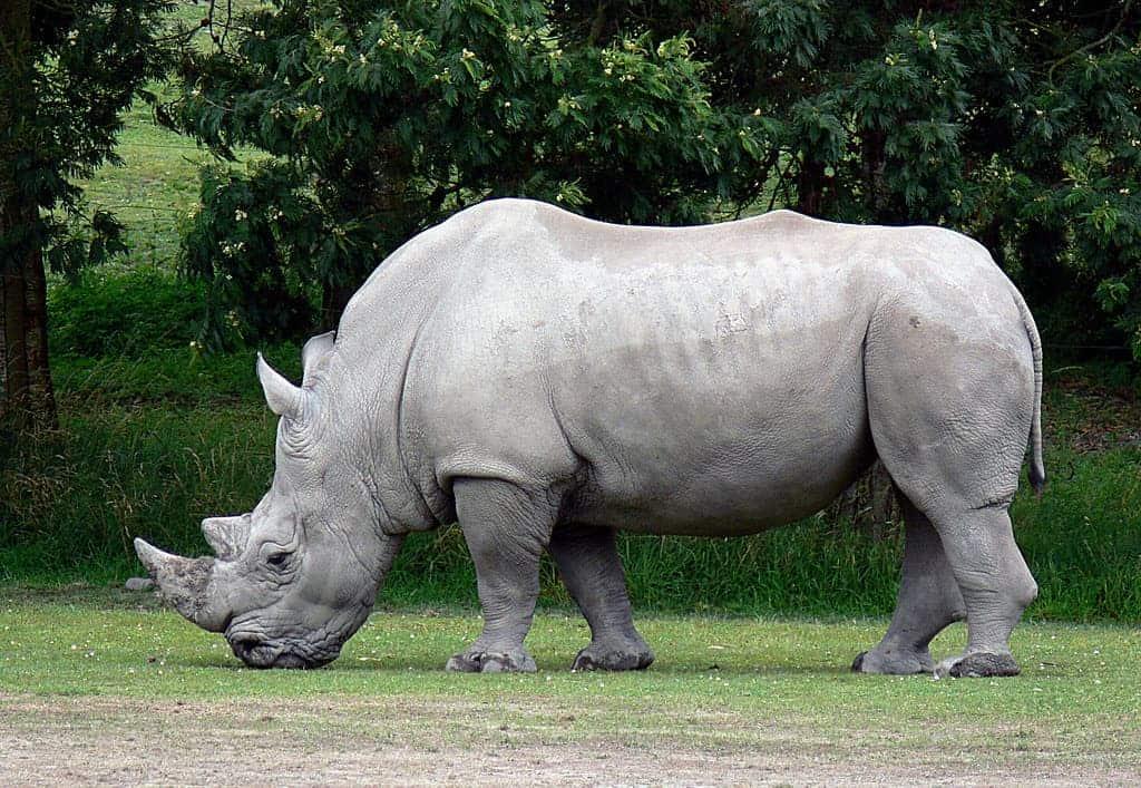 White Rhino calf born at The Wilds | Life | ashlandsource.com