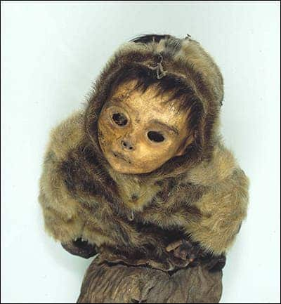 Human remains, like this mummified infant unearthed at Qilakitsoq, are threatened by changes brought by a warming climate to the soil of Greenland. Credit: National Museum of Denmark.