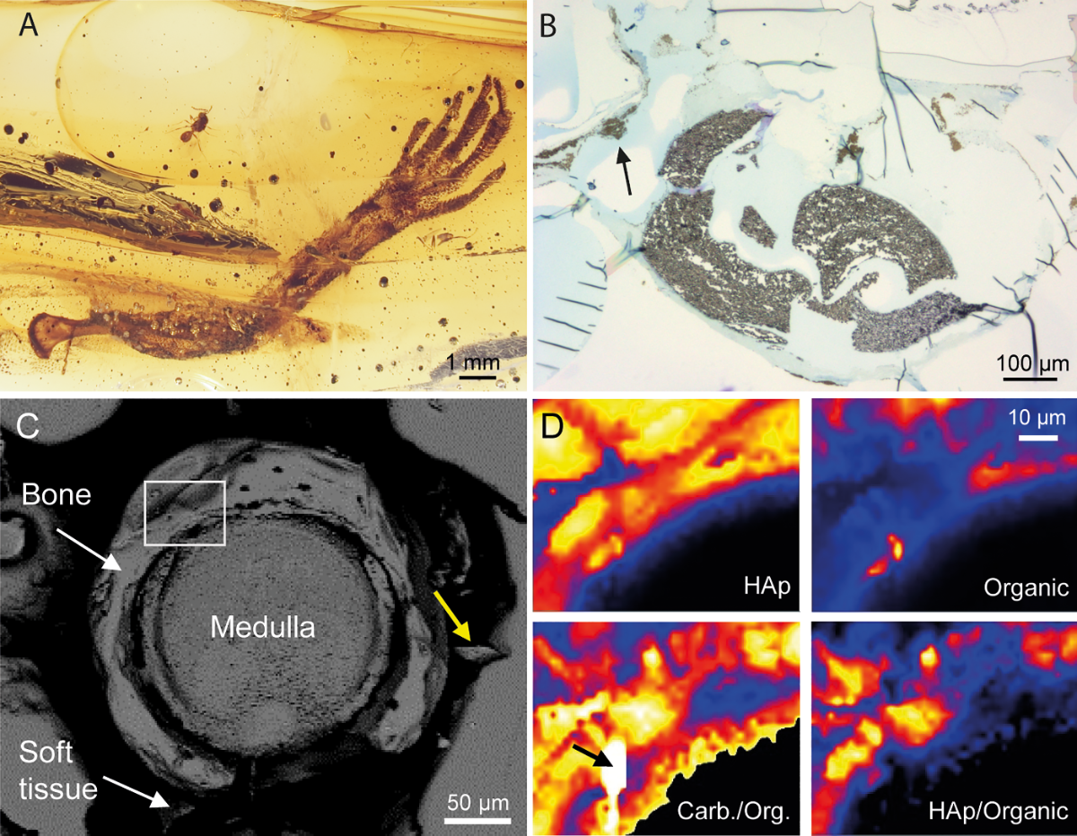 Fossil Friday: lizard foot trapped in amber helps us better understand fossilization - ZME Science