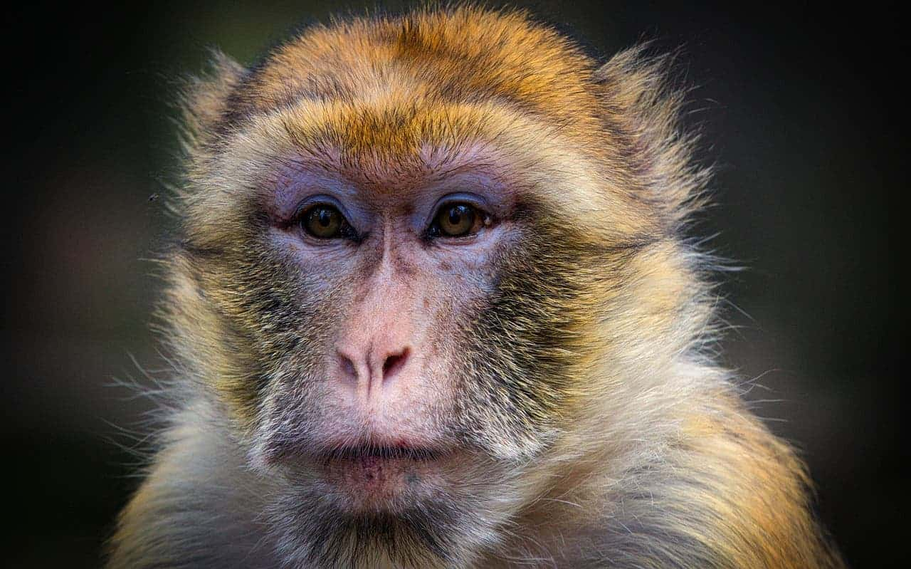 Scientists jump-start consciousness in brains of monkeys - ZME Science