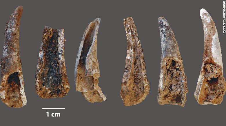 Европейские неандертальцы питаются свежими морепродуктами, укрепляя их мозг thumbnail