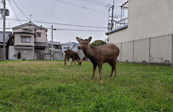 As cities quarantine, animals take to the streets