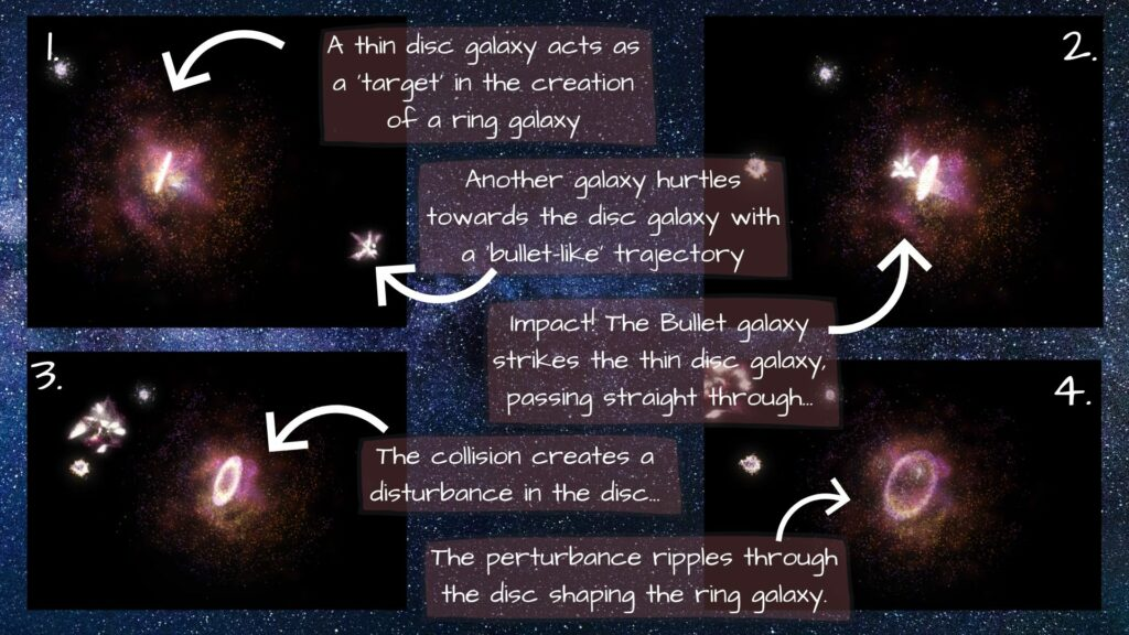 1. A thin stellar disk as a target or 'victim' galaxy. Another galaxy approaches on a head-on trajectory like a bullet. 2&3. Collision through the centre of the thin target galaxy. 4. The 'bullet galaxy' moves on as a perturbation spreads through the target galaxy. 4. The perturbation creates a ring-like structure. ( James Josephides, Swinburne Astronomy Productions/Robert Lea)