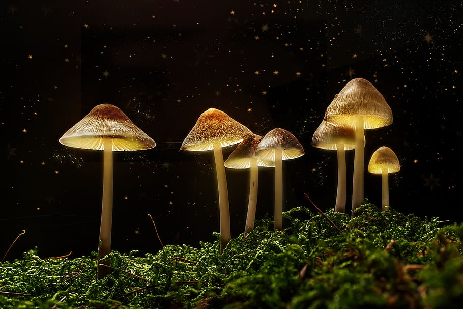Magic mushrooms have been consumed for centuries. Here's why
