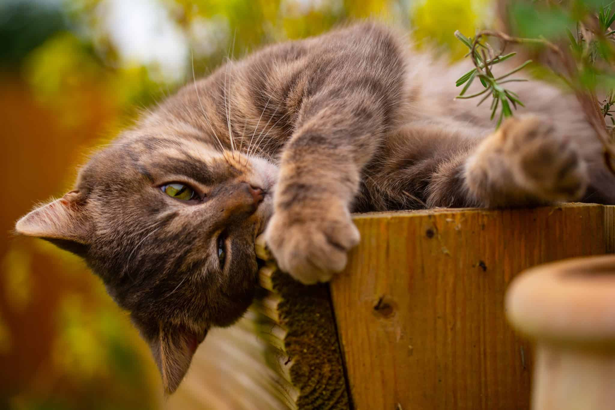 What Is Catnip Why Do Felines Go Crazy Over It