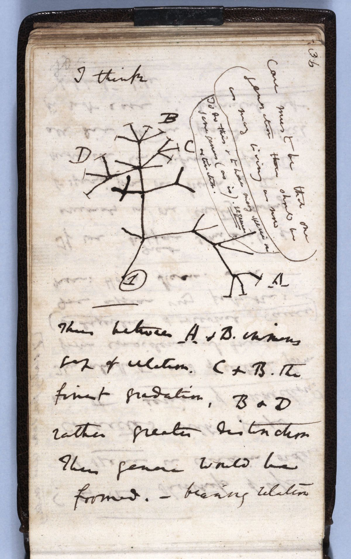 Two of Darwin's notebooks were lost, possibly stolen, around 20 years ago — Cambridge University calls for public help