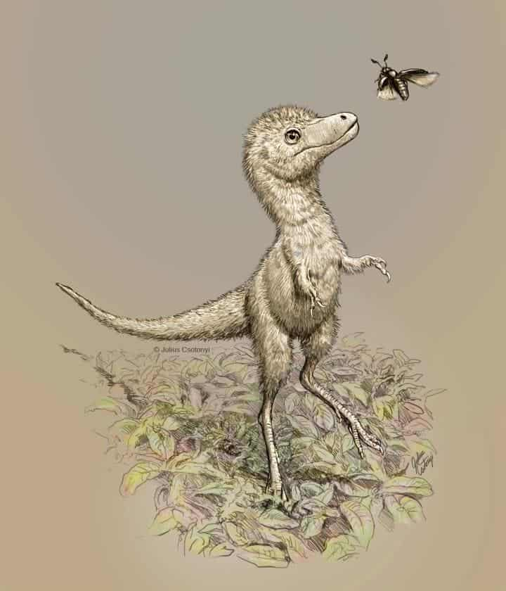 Tyrannosaurus rex started life as large as a Border Collie, a new paper reports - ZME Science