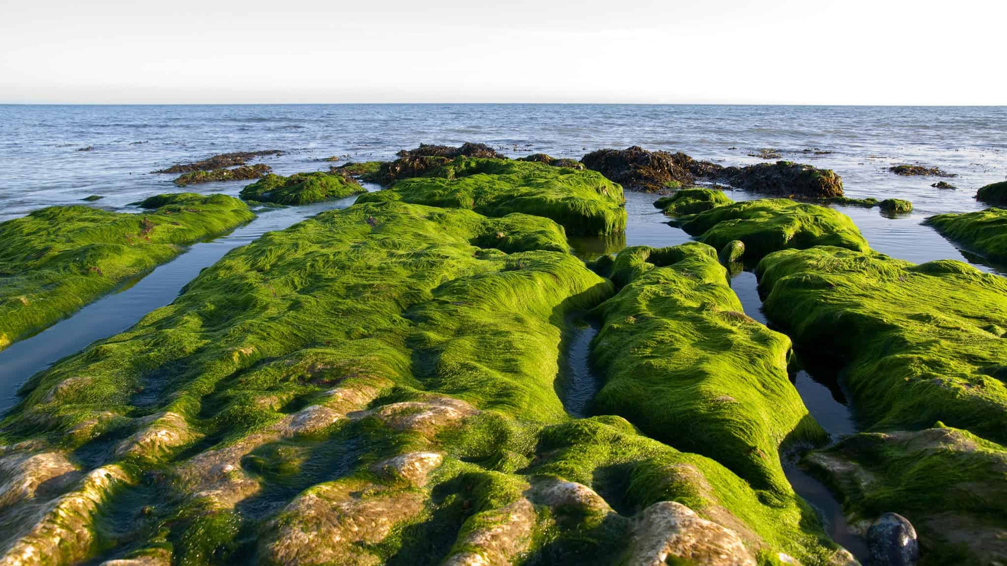 Simple seaweed could be used to heal human wounds with bio-ink