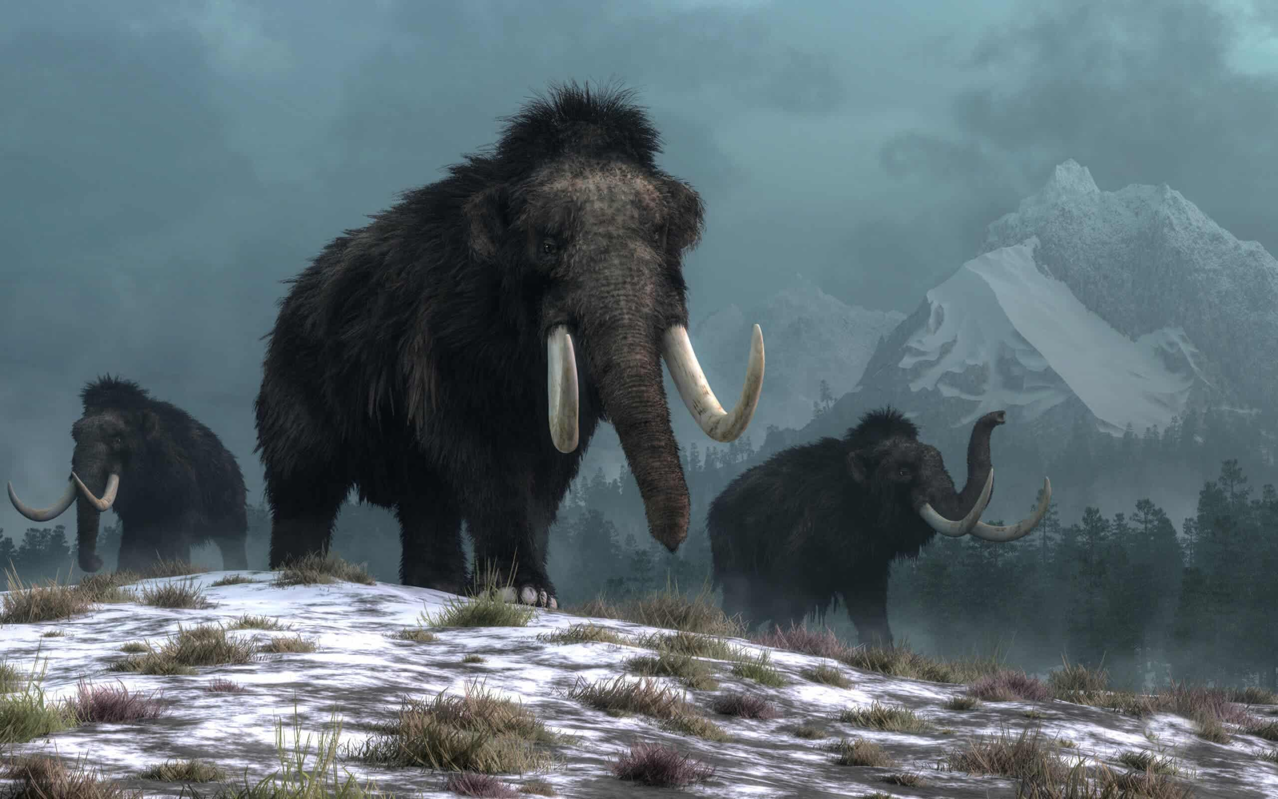 Not this time: climate change, not humans, wiped out wooly mammoths - ZME Science